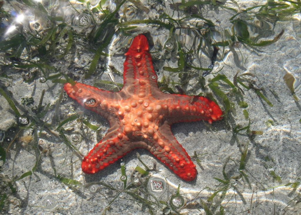 Starfish on Ibo Sandspit