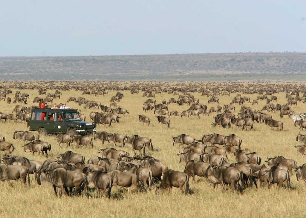 The Great Migration as seen from Rekero Tented Camp, Masai Mara