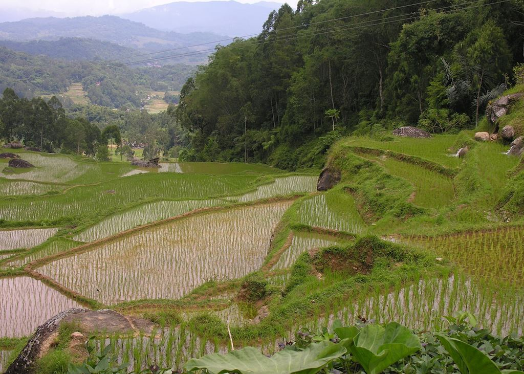 Rice terraces, Tanah Toraja, Indonesia