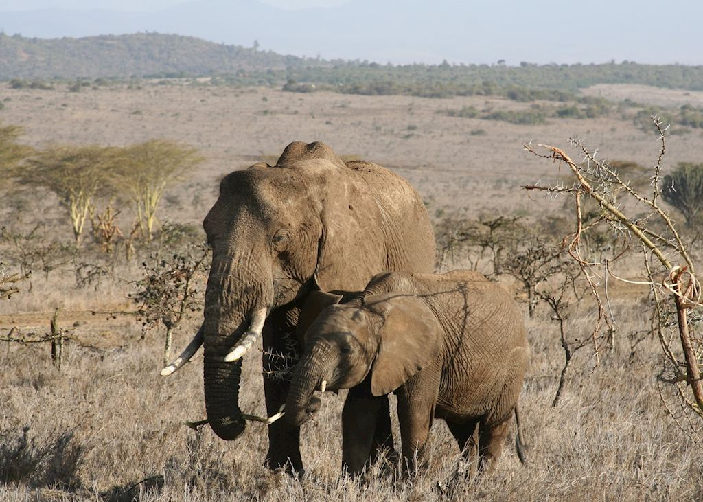 Elephant on the Borana Conservancy