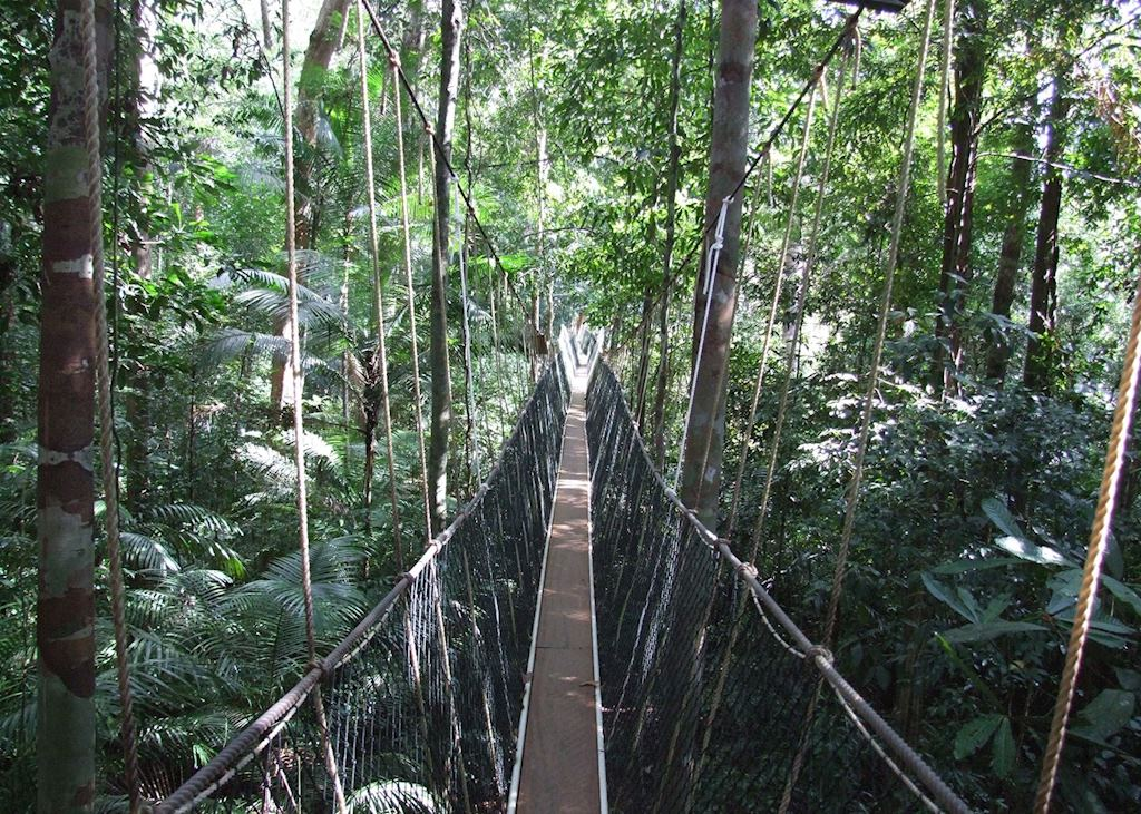 Tha canopy walkway at Taman Negara, Malaysia