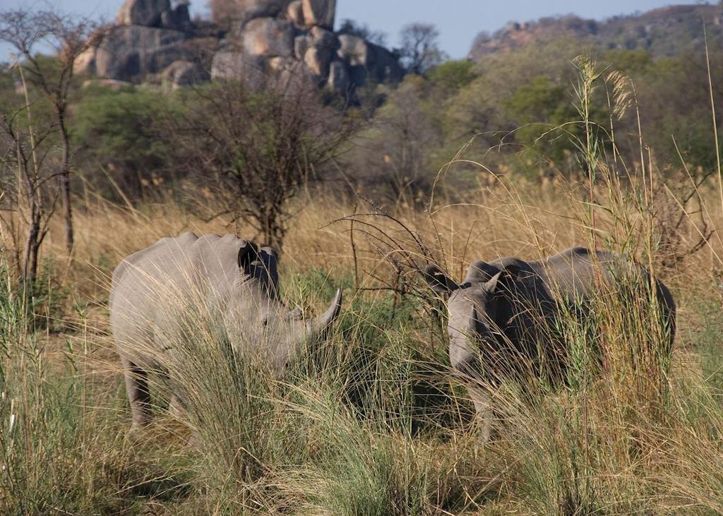 Rhino in Matopos