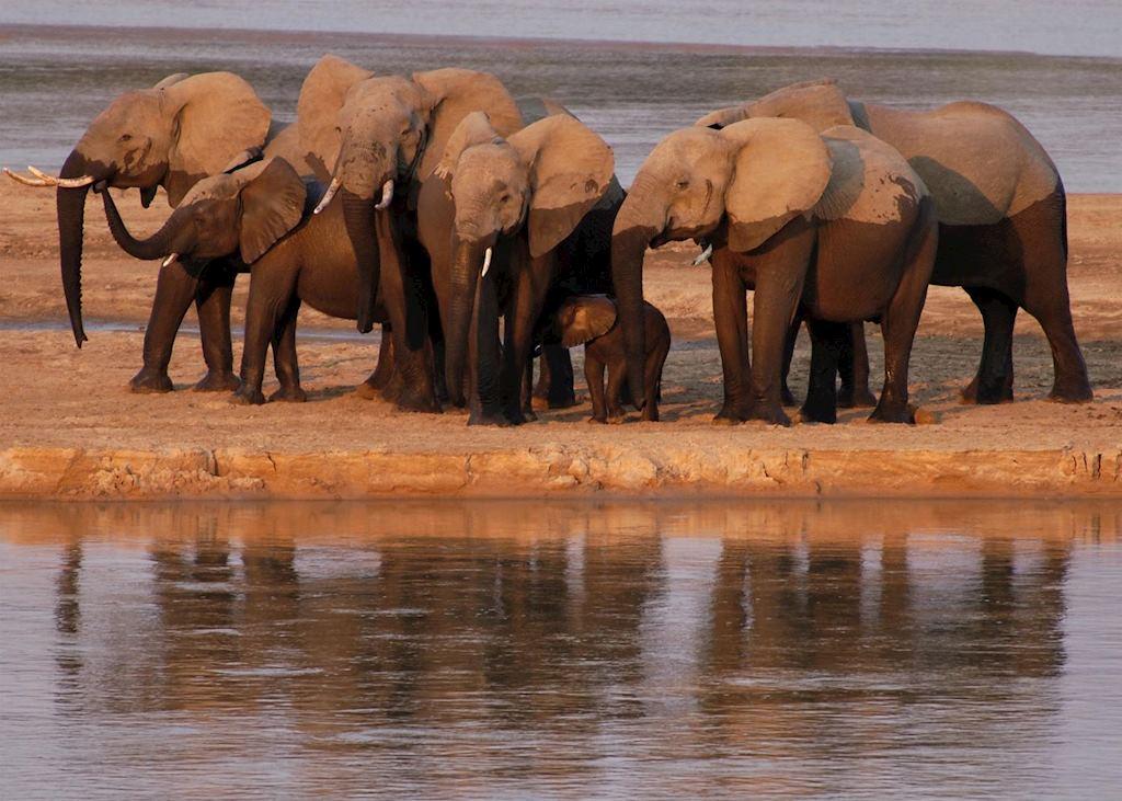 Elephant, South Luangwa National Park