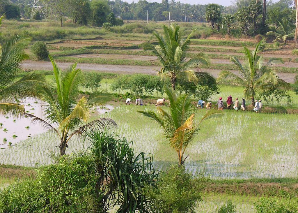 Keralan farming, Palakkad, India