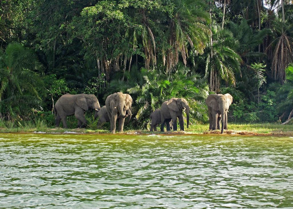 Elephants on Rubondo Island, Lake Victoria