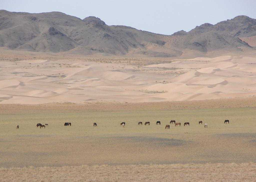 Gobi Gurvansaikhan National Park, Mongolia