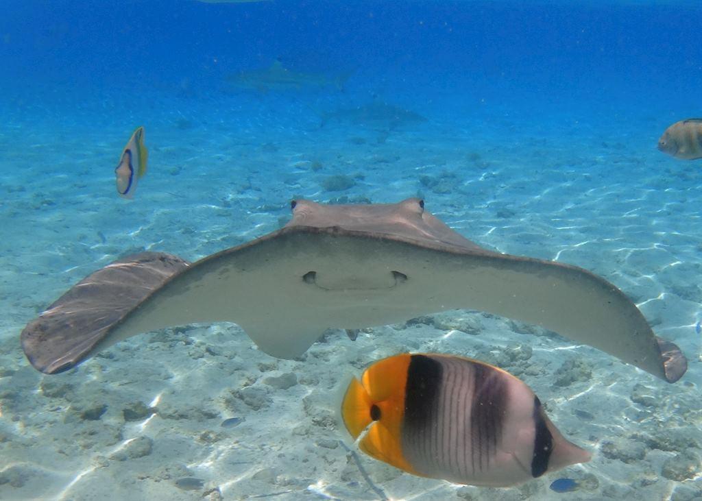 Underwater life, French Polynesia