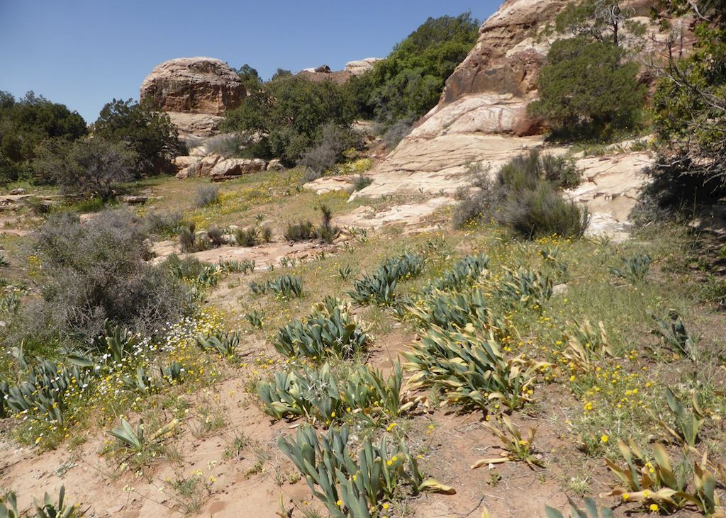Feathers Canyon Trail, Dana Nature Reserve