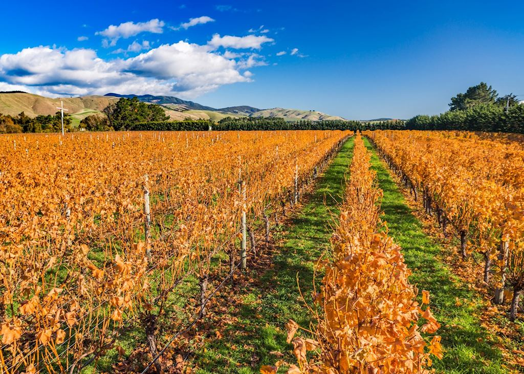 Vineyards near Martinborough