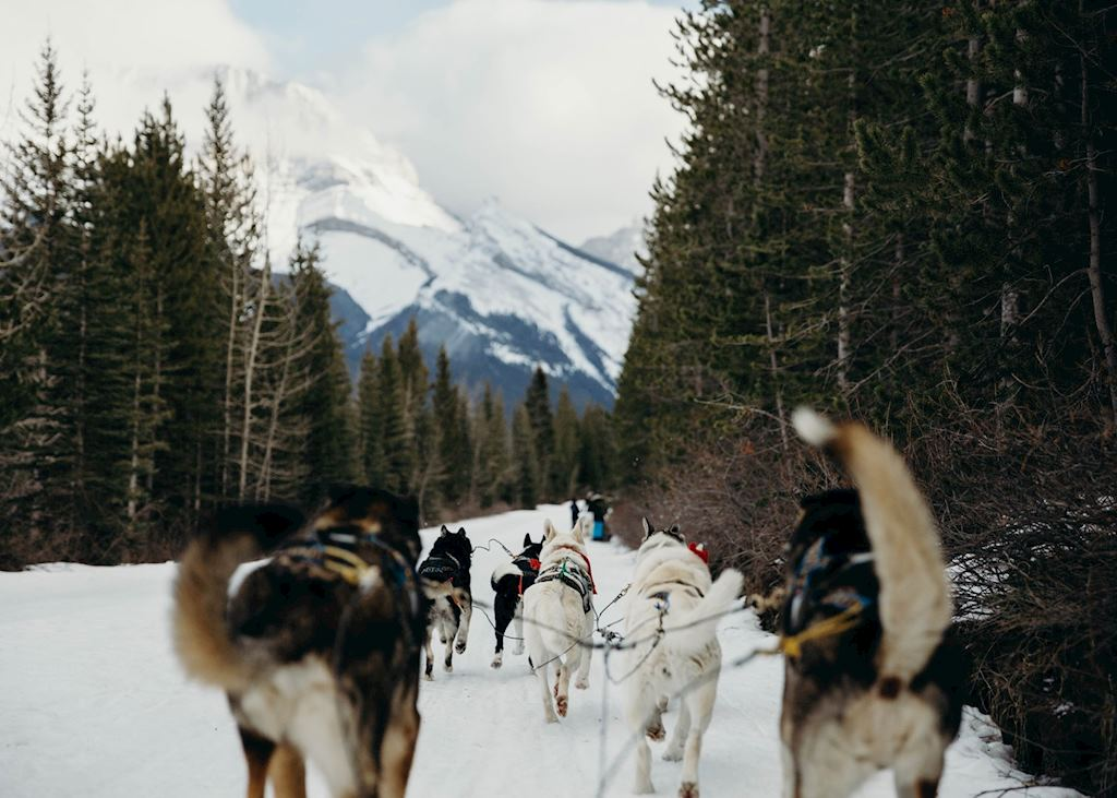 Dog-sledding near Whistler