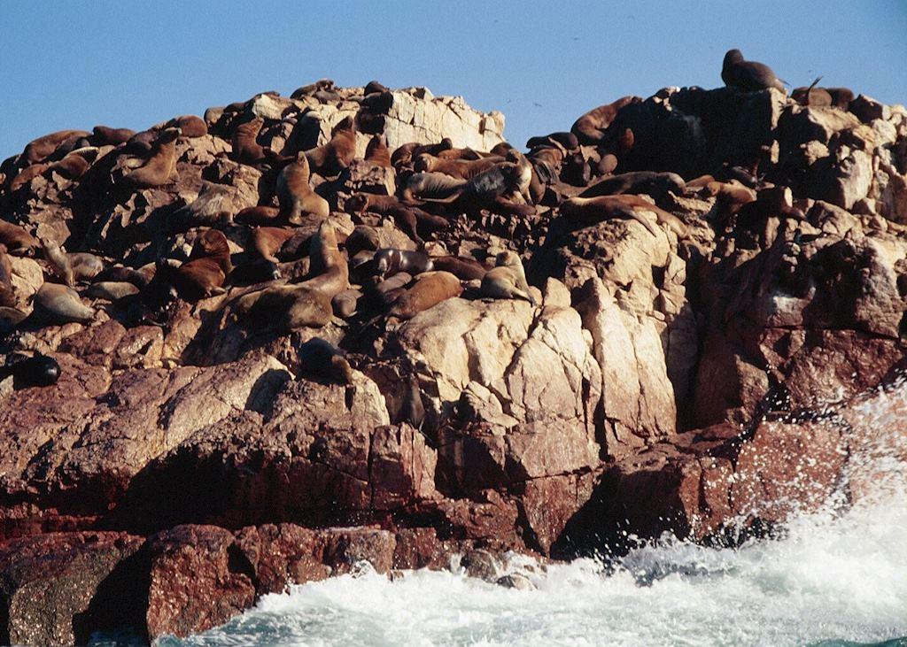 Sealions basking, Ballestas Islands