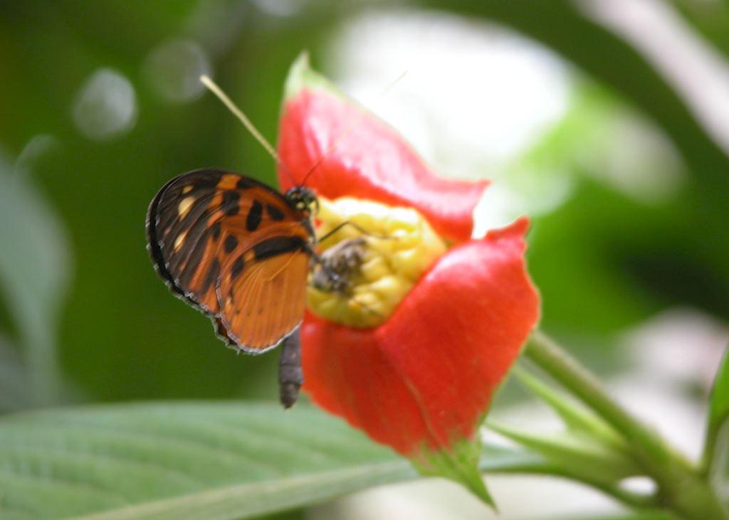 Wildlife in the Peruvian Amazon