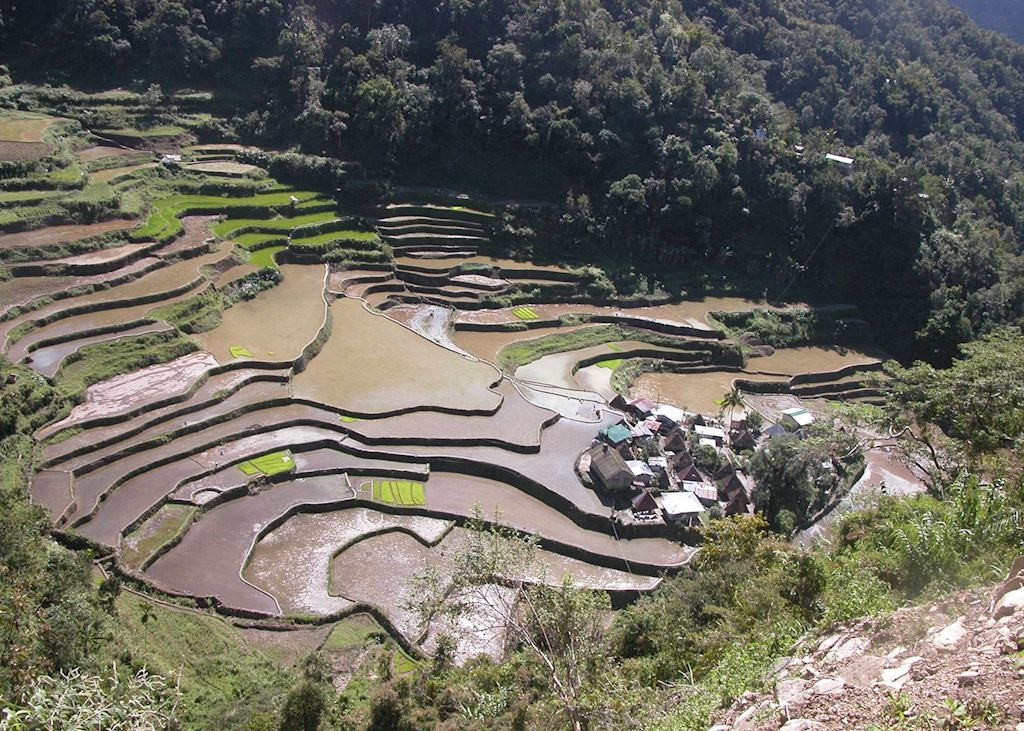 Hill village in the rice terraces, Banaue