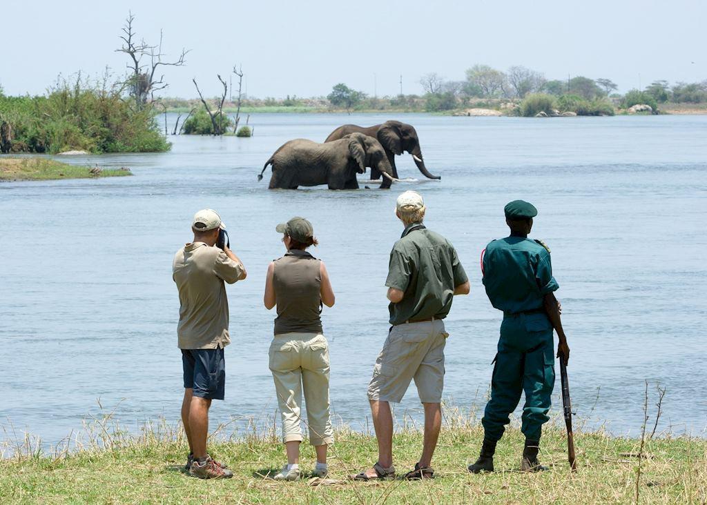Walking Safari in Majete
