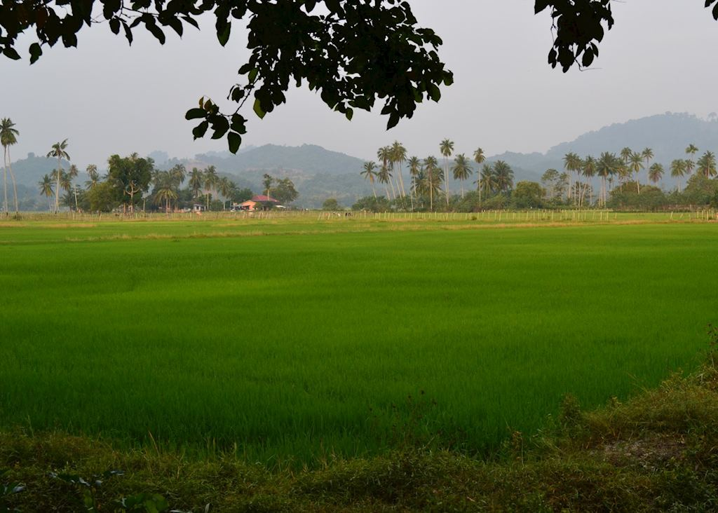 Paddy fields on Langkawi