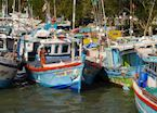 Boats in the harbour, Negombo