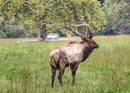 iStock_000048287486_Medium_deer_great_smoky_mountains