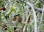 Inquisitive macaque
