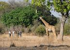 Walking safari in the South Luangwa National Park