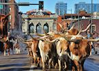 National Western Stock Show, Denver