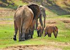 Lower Zambezi National Park,Zambia