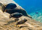 Snorkelling at Cape Maclear, Malawi