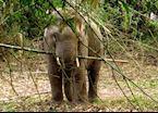 Elephant in Khao Yai National Park, Thailand