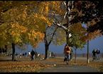 Cycling under trees in fall colours
