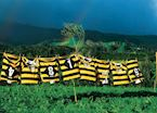 Taranaki Rugby Jerseys, New Zealand