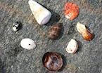 Shells, Dhofar beach