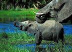 Elephants in Gunn's Concession