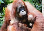 Mother and baby enjoying milk at the feeding platform