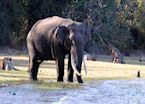 Periyar Wildlife Sanctuary, India