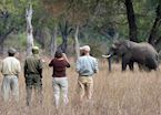 Walking safari in the Luangwa Valley
