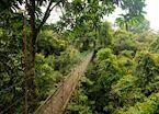 Canopy walkway, Danum Valley, Malaysian Borneo