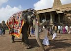 Festivities at Tanjore Temples, Tanjore, India