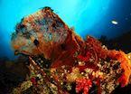 Underwater scene around Komodo, Indonesia