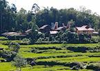 Torajan village amongst the rice fields