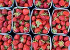 Fresh strawberries, France