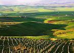 Vineyard, Marsala