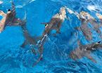 Sharks and rays excursions , Bora Bora