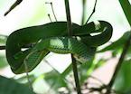 Snake hidden in the tree, Khao Yai National Park, Thailand