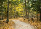 Forest trail, Door County