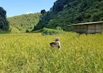Local farmer working in the fields of Mae Hong Son