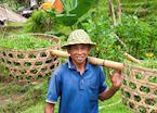 Farmer, Ubud, Bali
