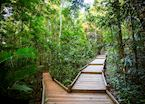 The Daintree Canopy Boardwalk, Daintree & Cape Tribulation