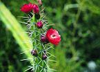 Flower, Sacred Valley