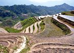 Rice Terraces, Longji