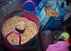 Selling corn at the market, Ifotaka Community Forest, Madagascar