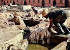 Marrakesh tannery